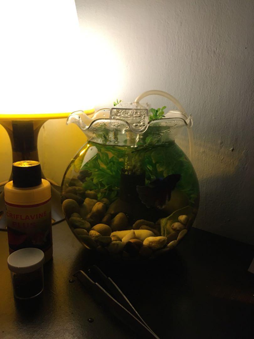 Aquarium Mini Fishbowl Ikan Cupang Bisa Paket Bisa Tidak Lokasi Bandung Perlengkapan Hewan Aksesoris Hewan Di Carousell