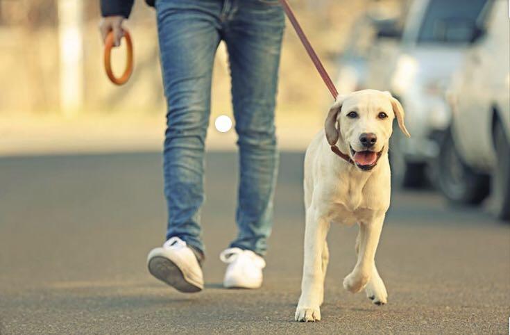 Dog walker 10$/hr