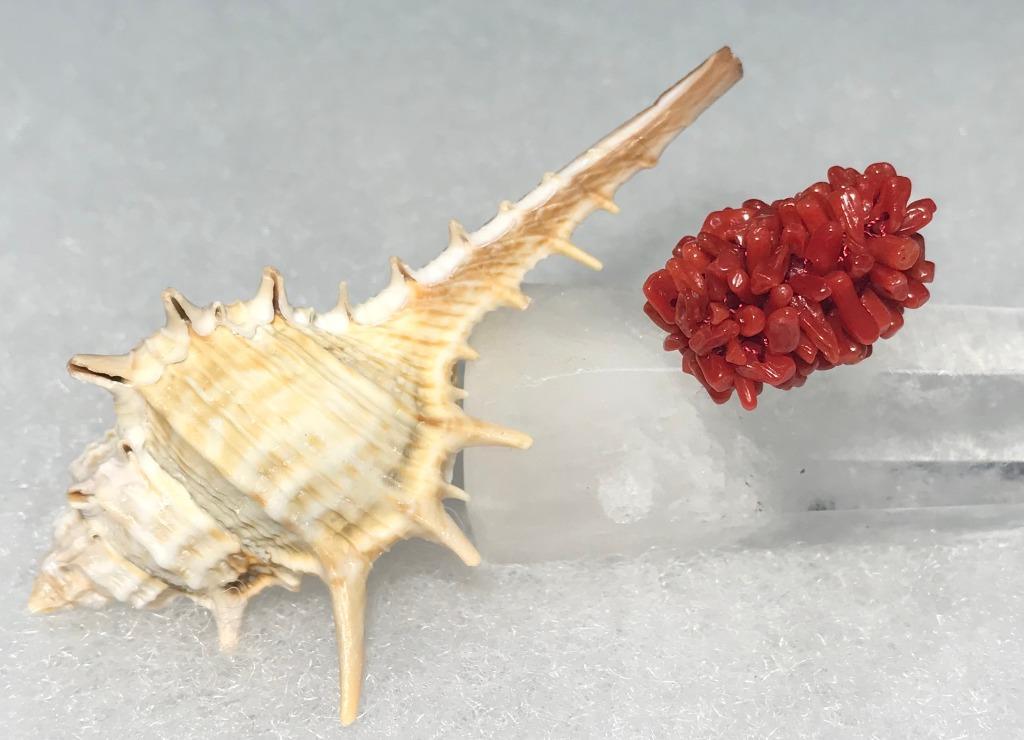 3月誕生石~海底有機寶石~天然AK紅珊瑚毛毛蟲配件