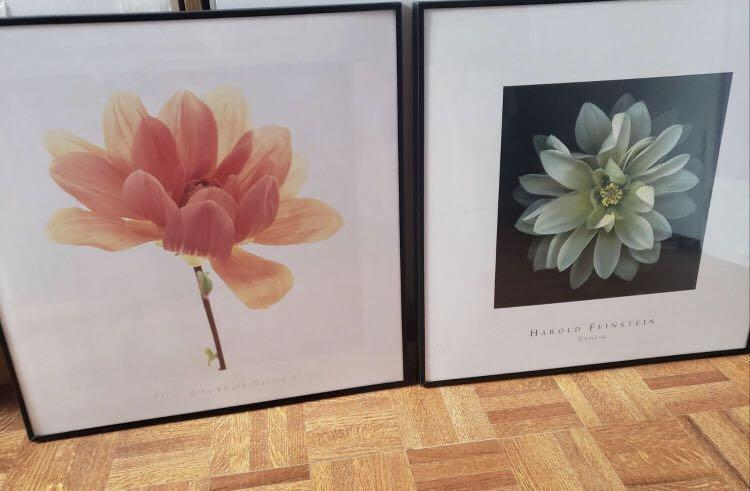 Dahlia Pictures with Frames