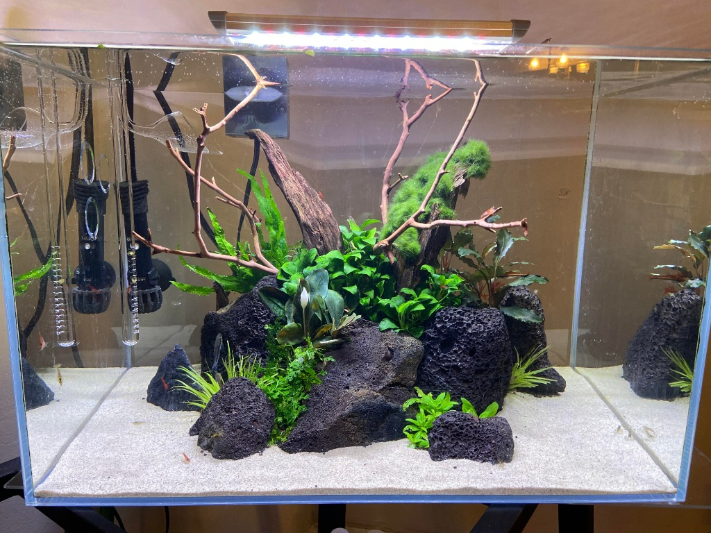 Low Tech Sand Aquascape Design Pet Supplies For Fish Fish Tanks On Carousell