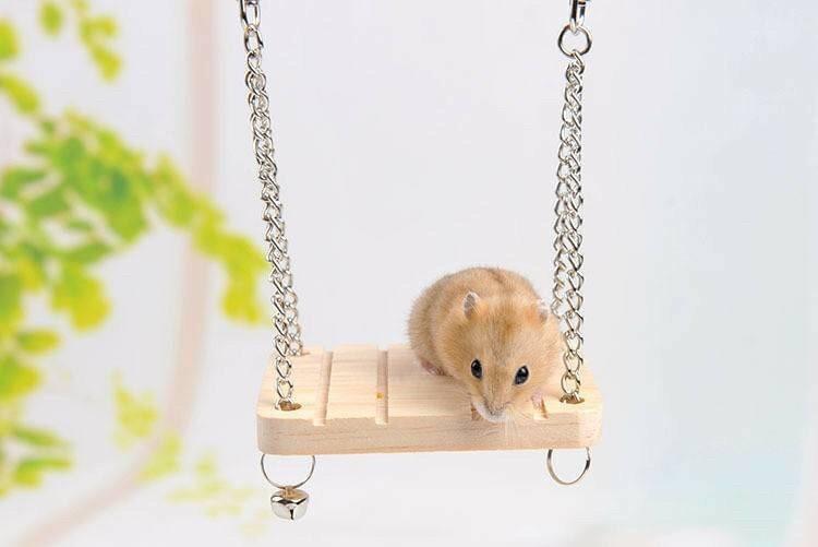 ‼️預購 寵物鼠 黃金鼠 倉鼠 盪鞦韆