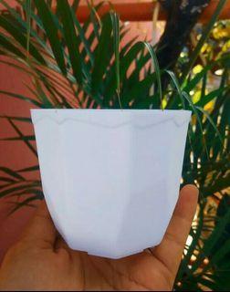 Pot bunga warna putih