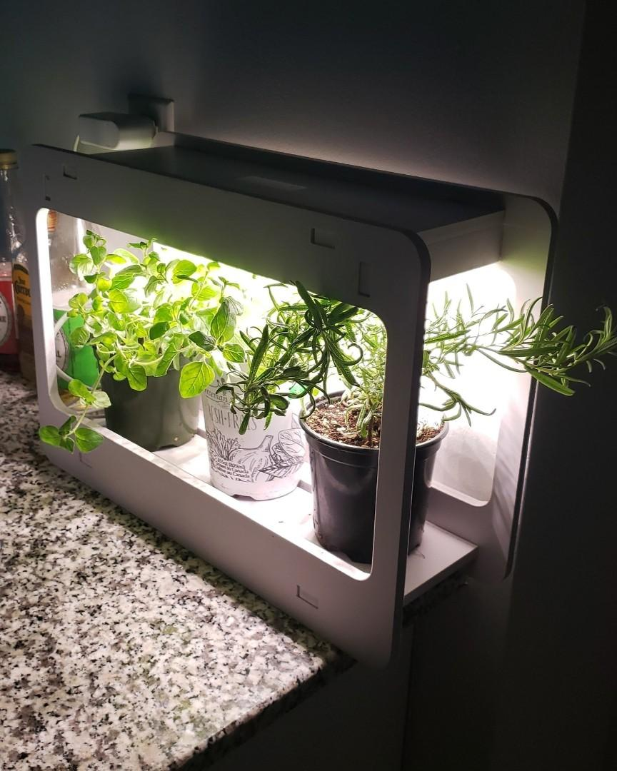 3 herb plants for sale