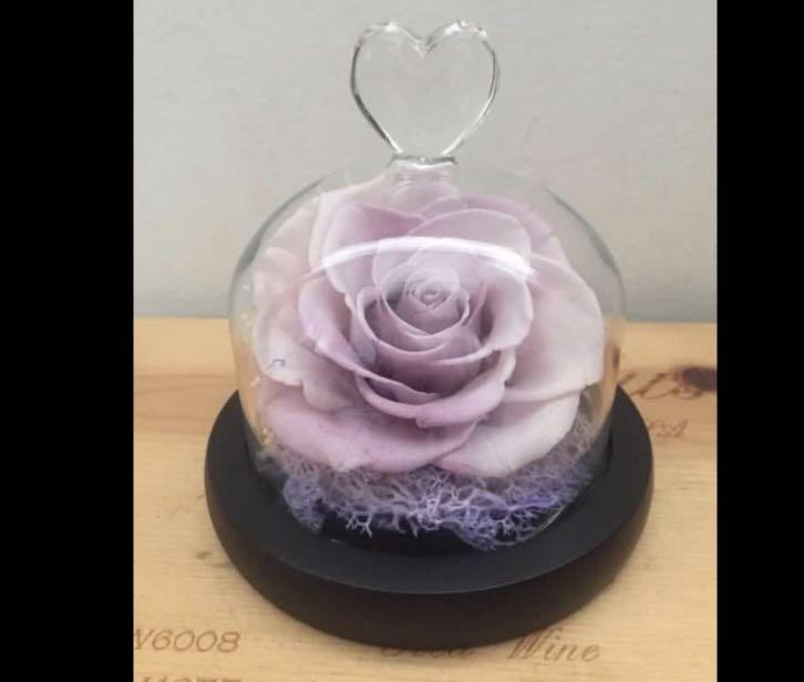 Preserved flower, big sweet 2 tone white / rose single dome with fairy light AAA batteries#new arrival