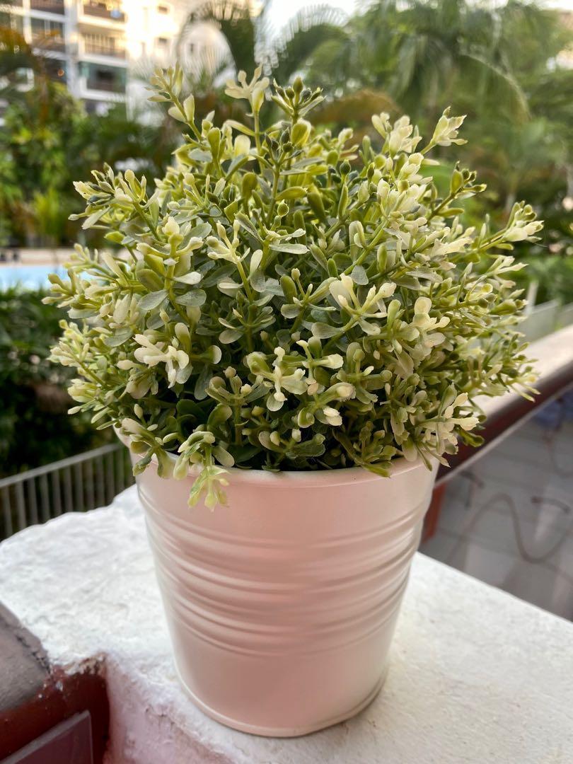 5 plants in pots.