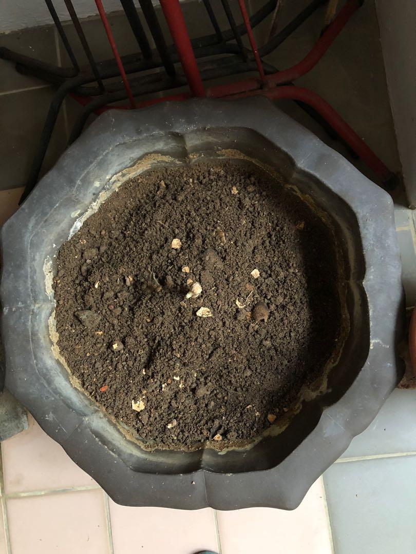 39cm Bonsai Pot With Soil Gardening Pots Planters On Carousell