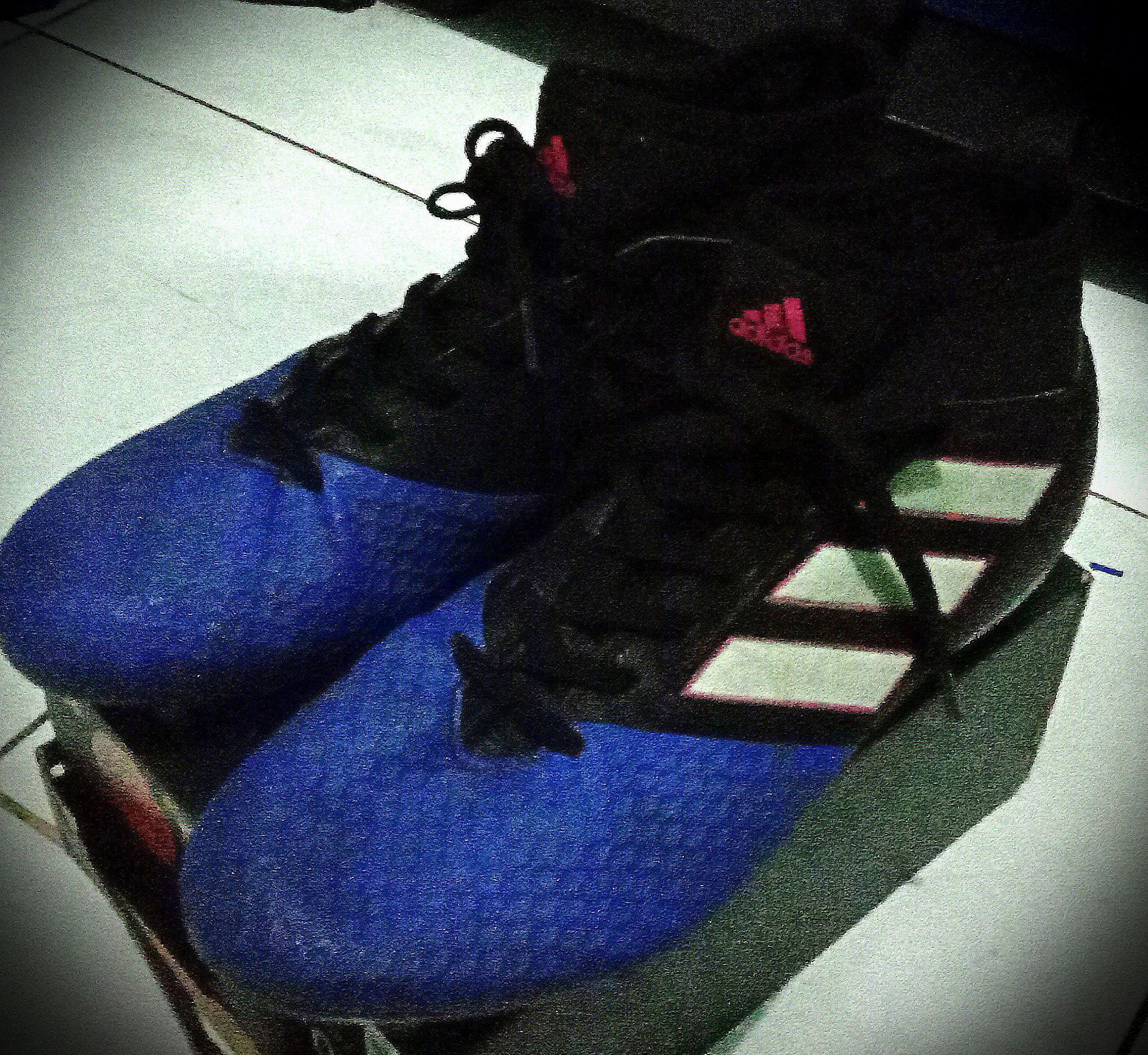 Sepatu Anak - Adidas Ace 17.3 Primemesh FG
