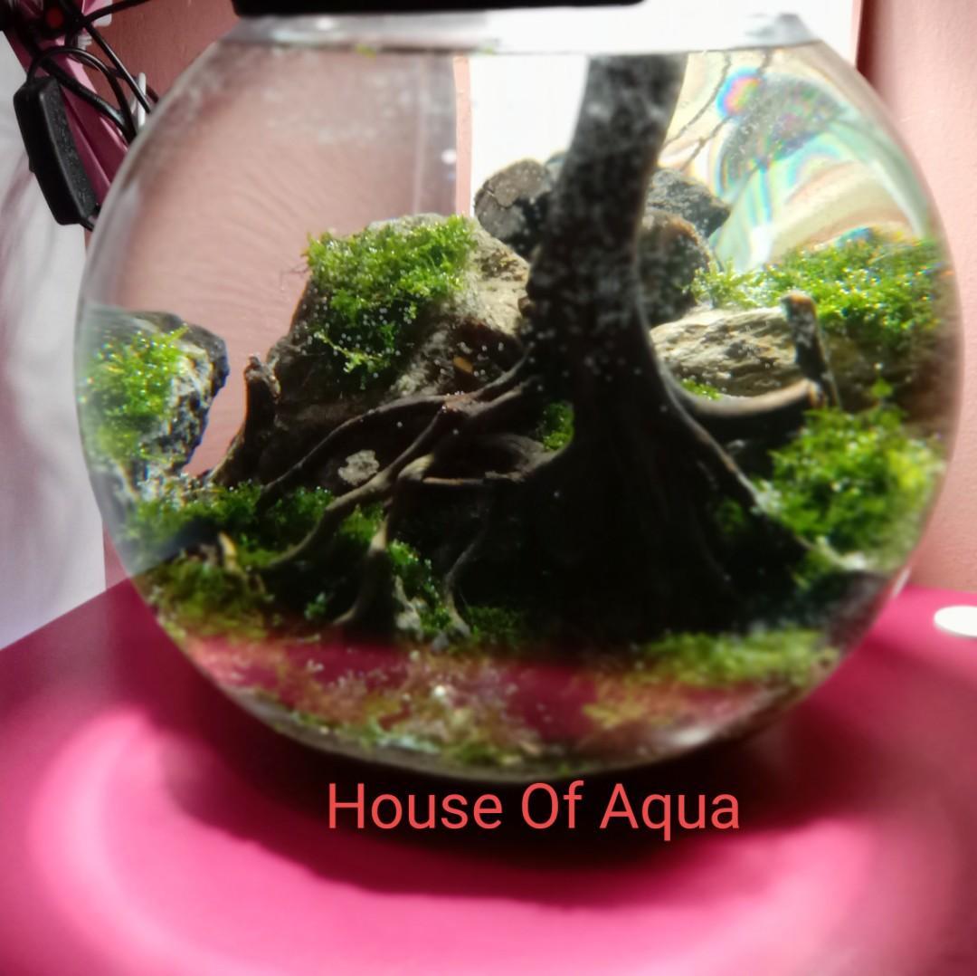 Fishbowl Aquascape Aquarium Bulat Perlengkapan Hewan Aksesoris Hewan Di Carousell