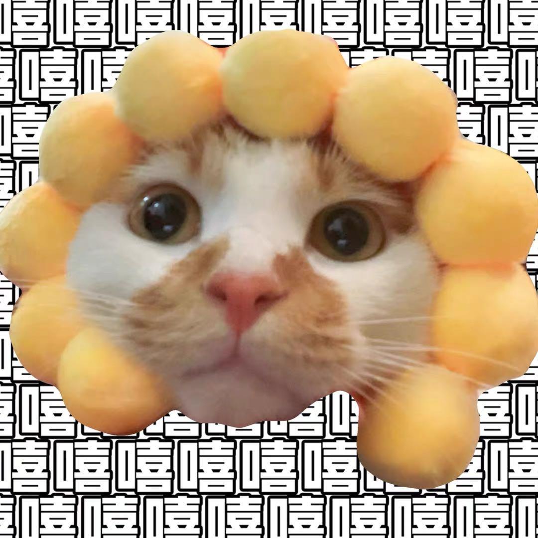 寵物配件 寵物項圈 貓 狗 羞恥圈 寵物服飾 現貨