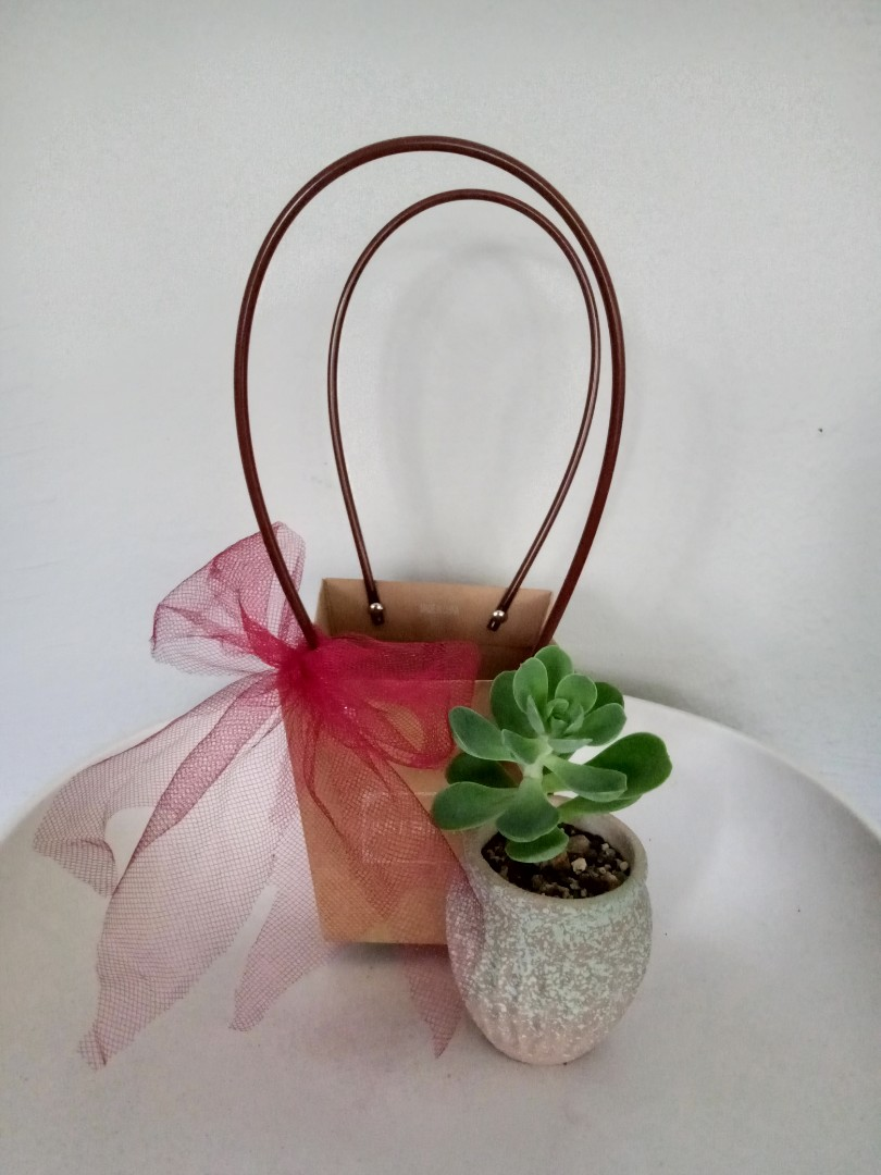 Succulent Gift Basket Home Furniture Gardening On Carousell