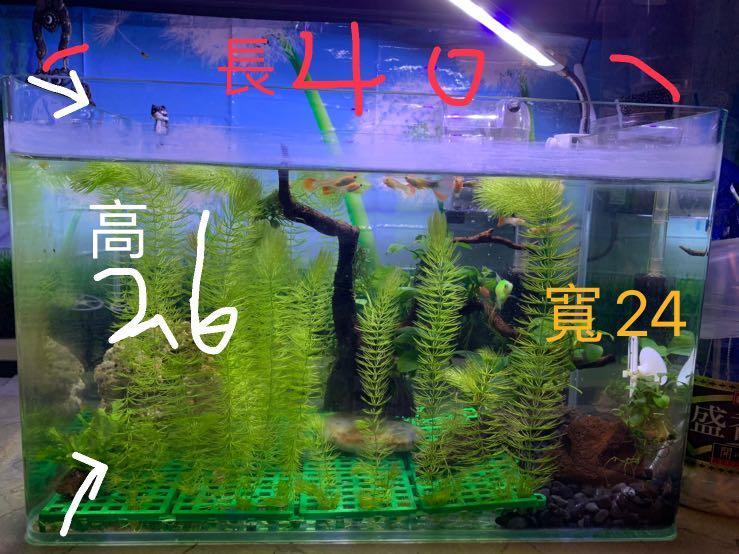 魚缸 fish tank