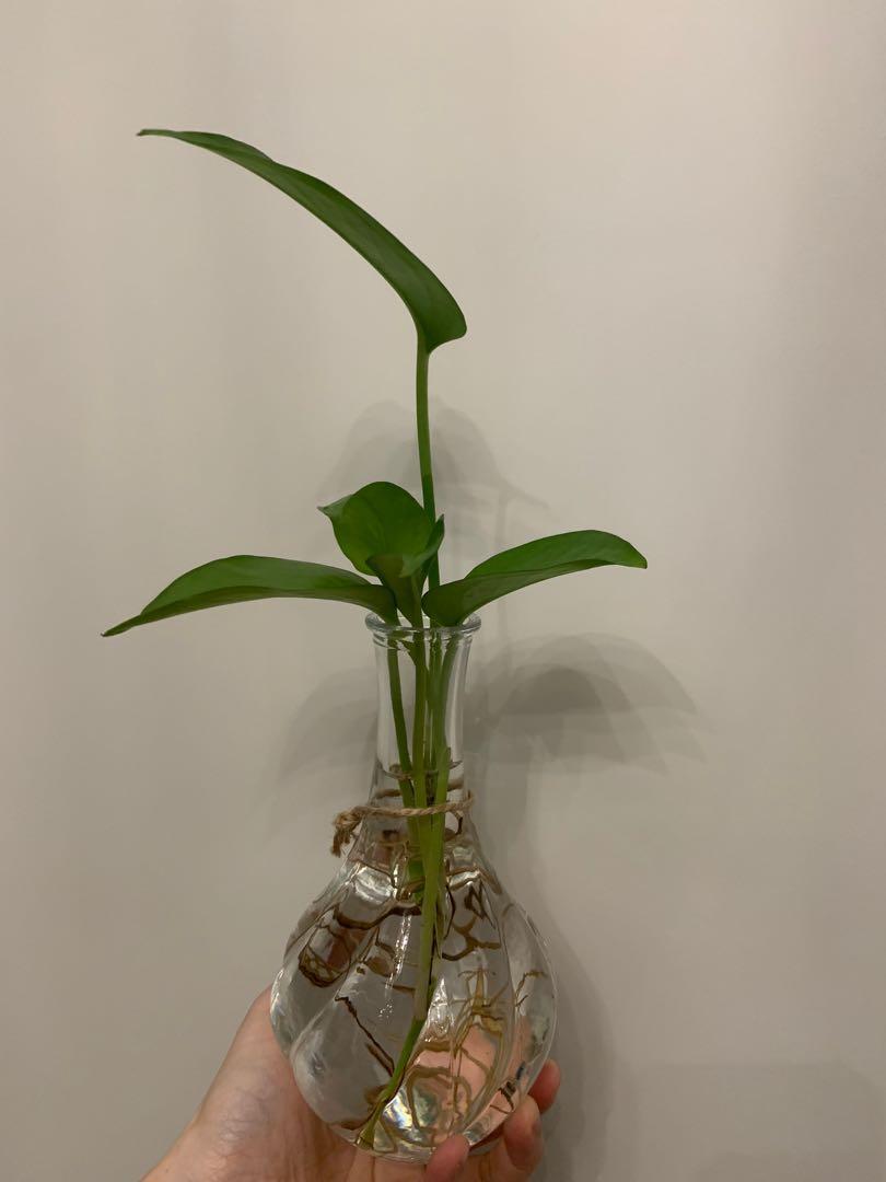 療癒小植栽