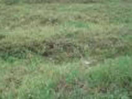 Alabang Hills Vacant lot for sale