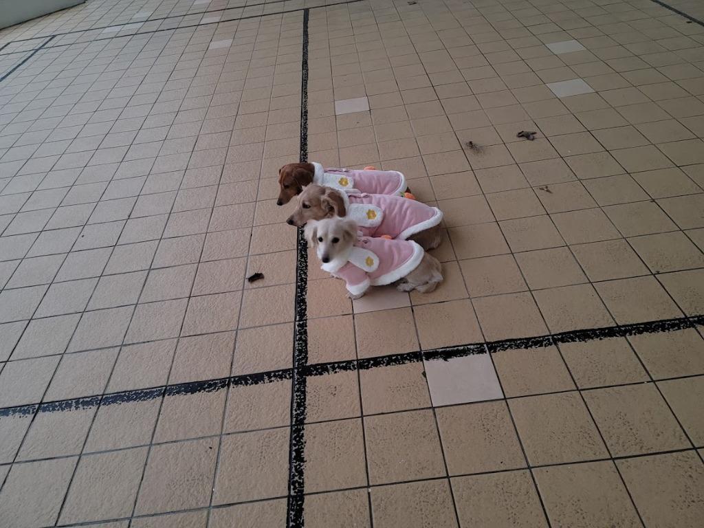 寵物粉色兔子棉衣秋冬季棉衣加厚保暖兩腳變身裝