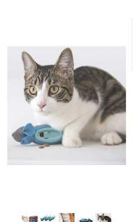Cat Puzzle Hunting Mouse Toy