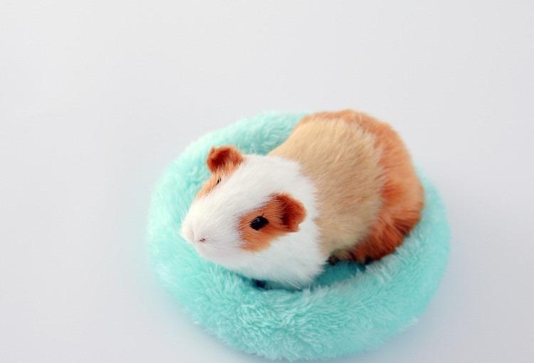 寵物鼠保暖墊 (小號) 倉鼠保暖墊 寵物窩墊 倉鼠綿墊 保暖墊 寵物鼠