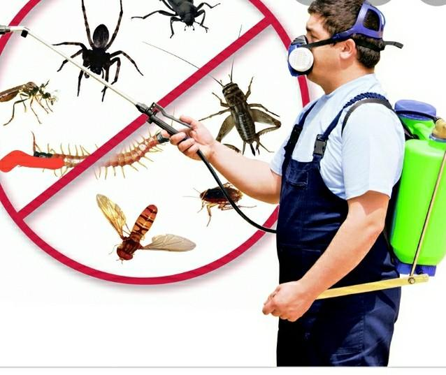 Pest control tech