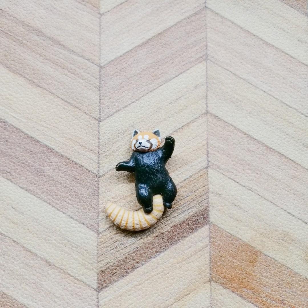 休眠動物 小浣熊