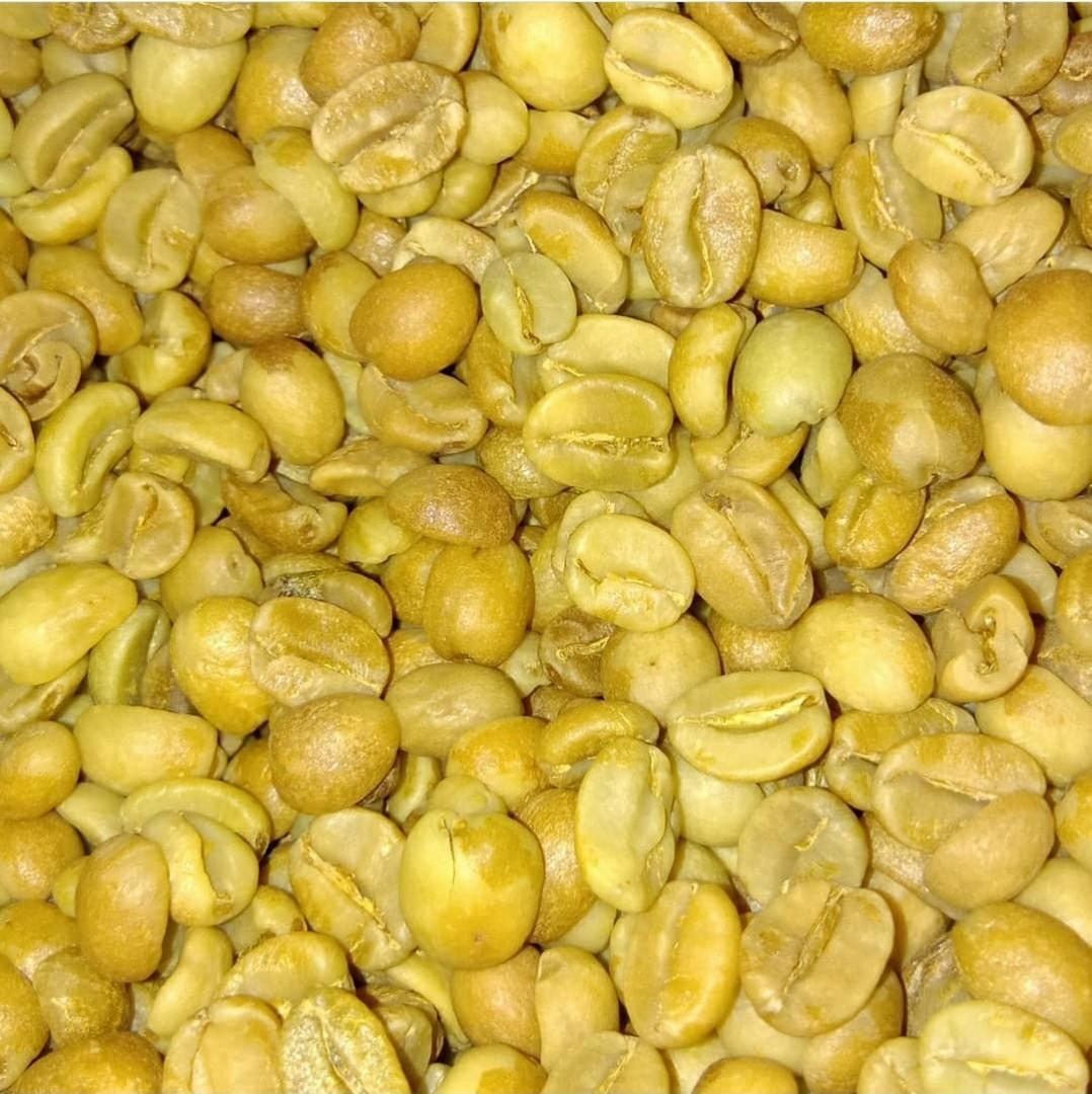 Coffe bean arabica