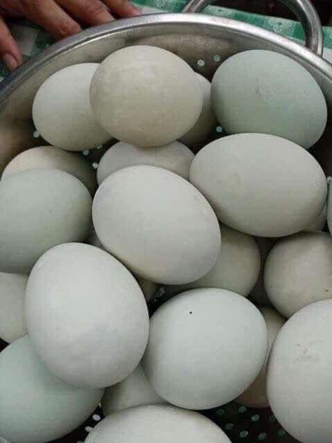 Balot (duck egg)