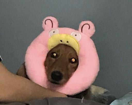 寶可夢 甜甜圈頭飾