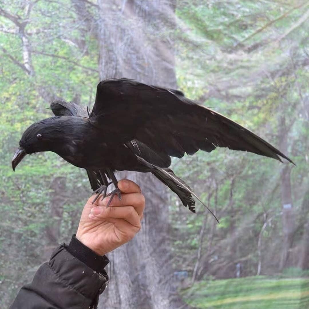 Crows prop for cosplay