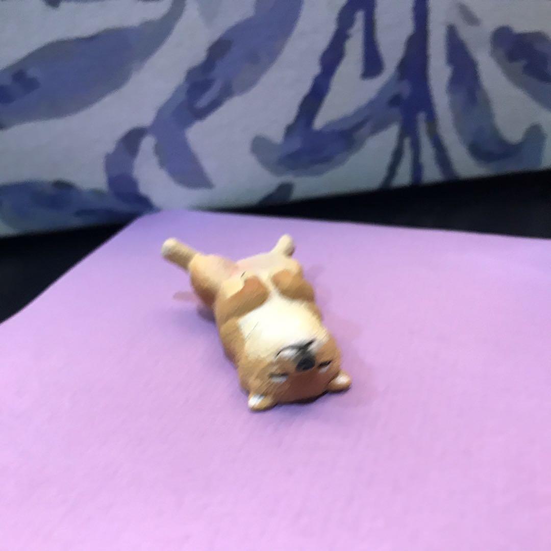 扭蛋 動物睡姿系列 柴犬