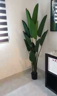 ( Cash On Delivery ) Artificial Plant 1.8m / 1.6m / 1.2m
