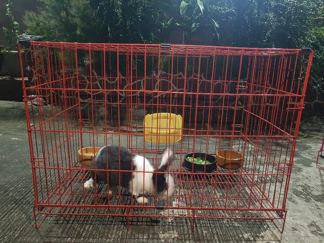 NZ Rabbit (Buck) with XL cage
