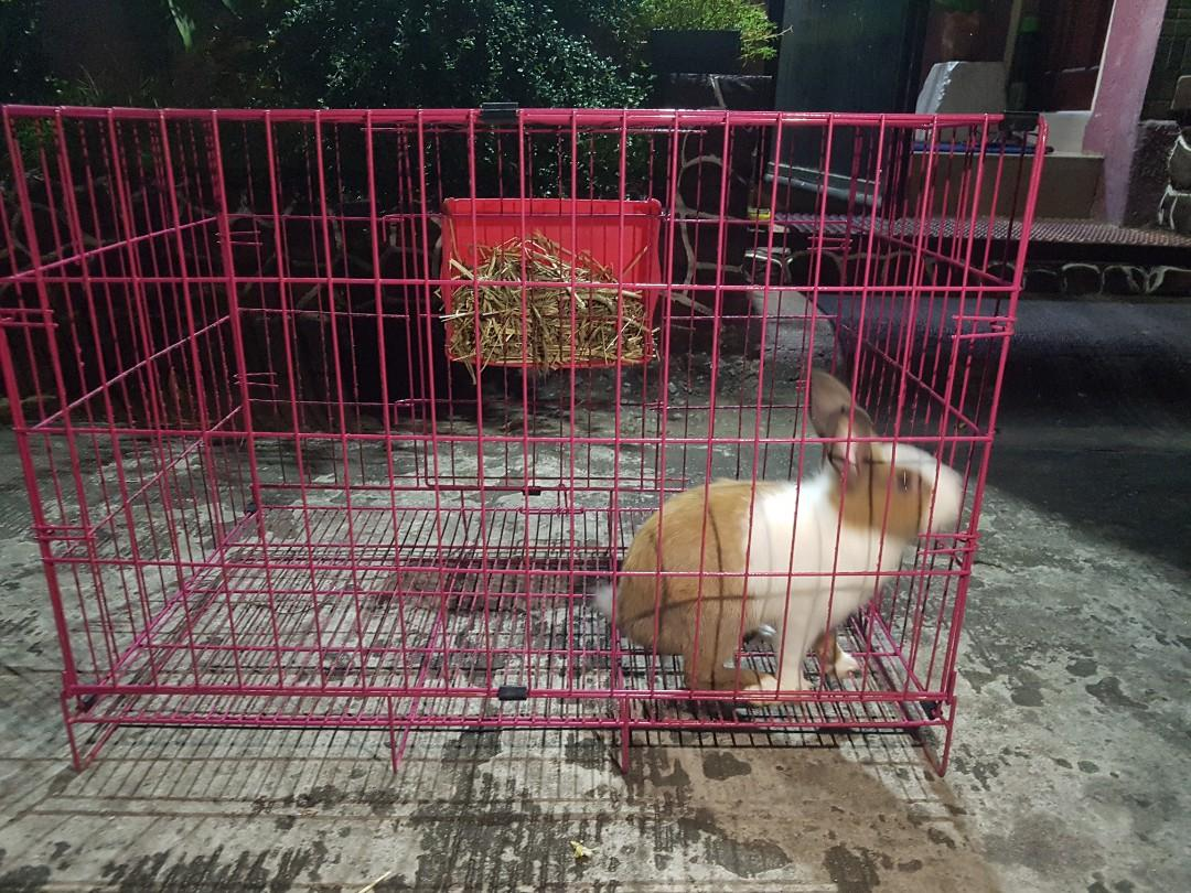 NZ Rabbit (Doe) with XL cage