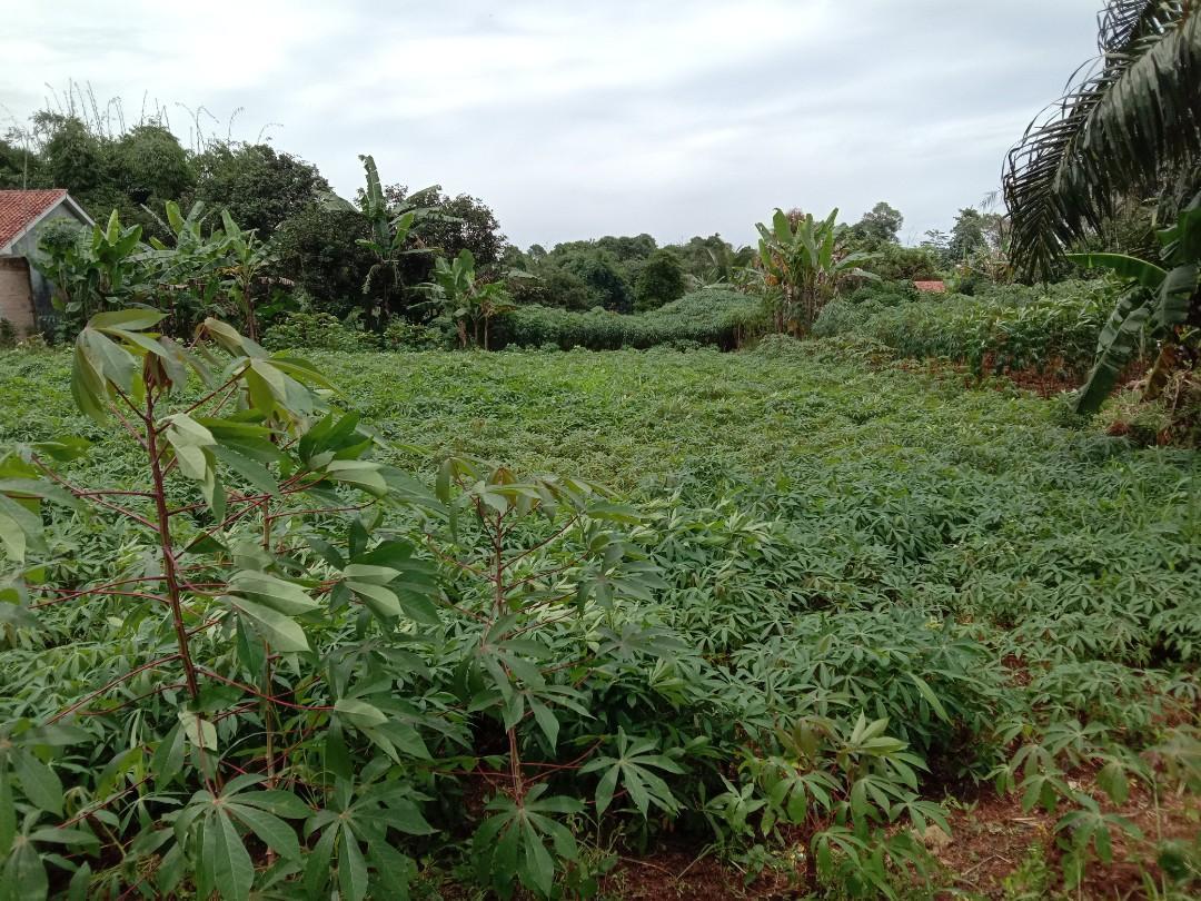 Tanah 7000 m2 Ds Tegal Kemang Bogor