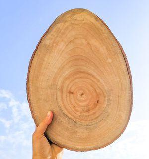 蛋形樟木板 適合鹿角蕨種植 樟木本身散發的香氣也可以驅蟲,非常適合種植植物與繪畫擺飾