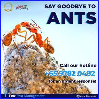 BEST ANTS TREATMENTS / Free Quotation On Site