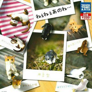 欲言又止的可愛動物 TAKARA TOMY -貓