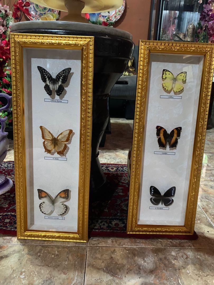 Pajangan kupu-kupu asli diawetkan figura kaca