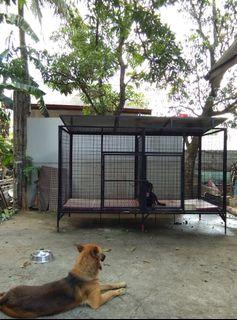 DOG CAGE with ISSUES