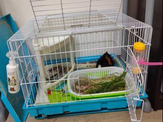 兔籠/天竺鼠籠/幼貓籠二手