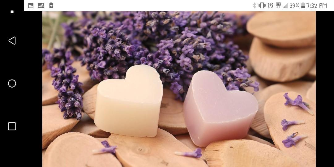 Organic Lavender Seedlings