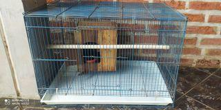 4 Kandang Burung Murai Lovebird