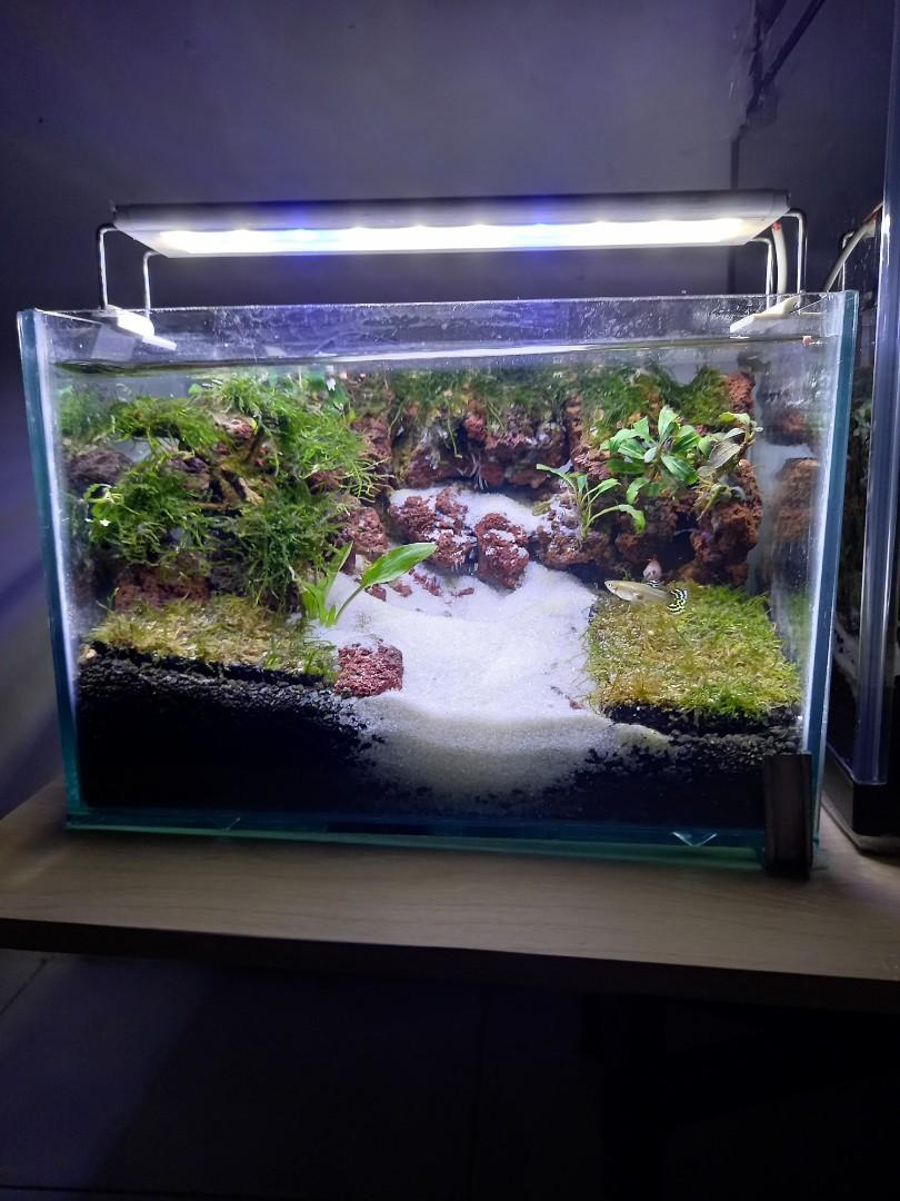 Aquascape ukuran panjang 30cm tinggi 20cm