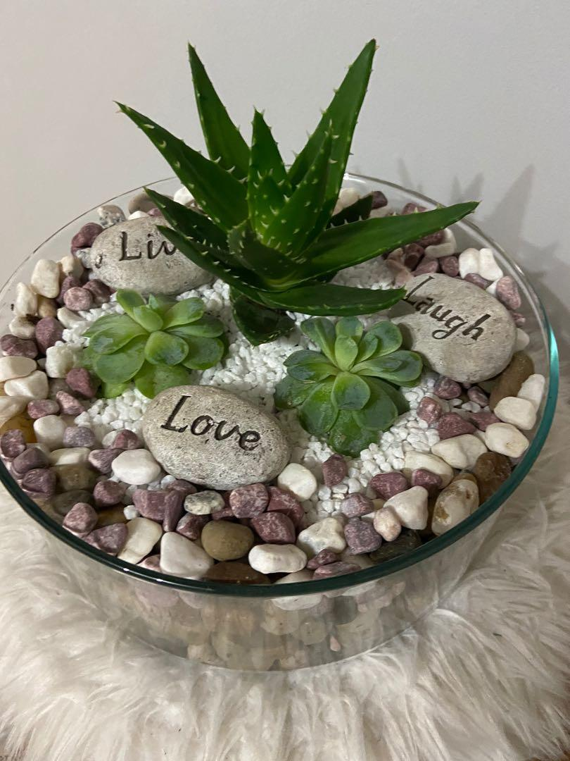 🔥Assorted Succulent in a Glass Bowl