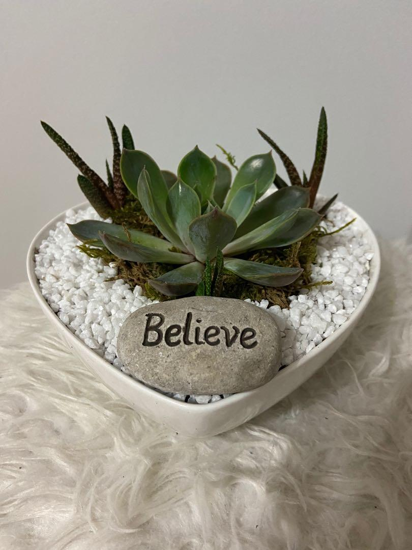 🔥Newly Planted Assorted Succulent in A heart Pot