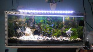 Aquarium aquascape 60x25 cm fullset no ikan