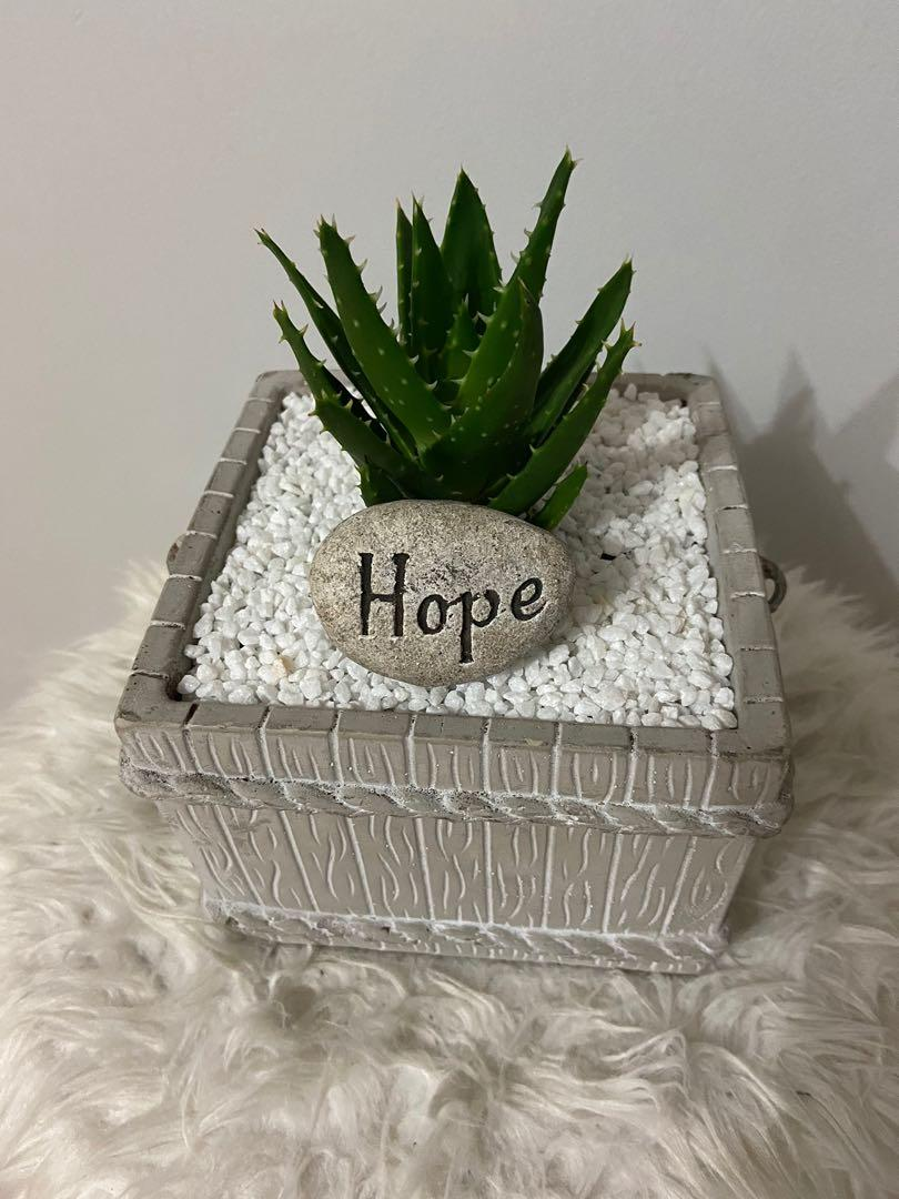 Newly Planted Succulent
