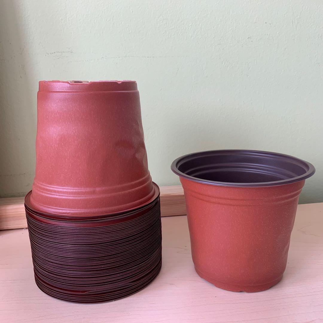 "5.75"" nursery pot  (buy 10 get 2 free)"