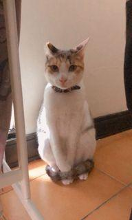 台中地區 貓咪 寵物到府照顧🐱
