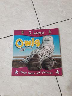 I Love Owls (a book about owls) by Miles Kelly