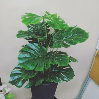 SKGarden   Artificial Monstera Plant 70cm to 180cm