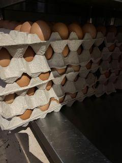 B grade eggs